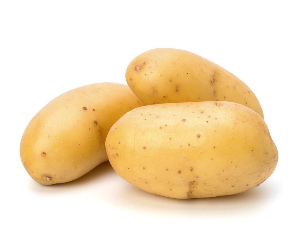 kartoffel nicola festkochend